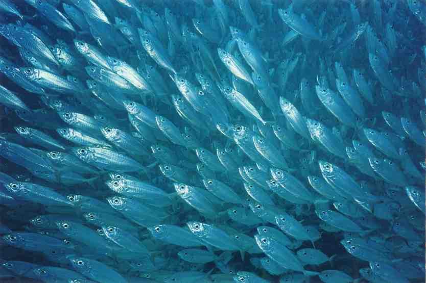 Plenty More Fish IntheSea…