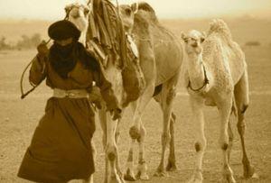 Berber6big