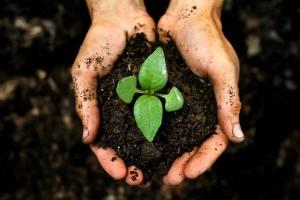 organic-soil-940x626